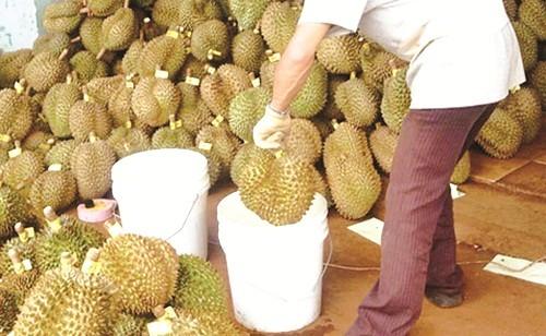 Cách chọn mua sầu riêng tại Hà Nội chuẩn thơm ngon