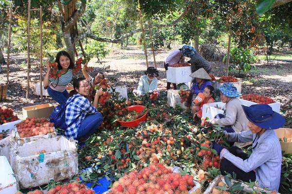 Sức hấp dẫn khó cưỡng của miệt vườn trái cây