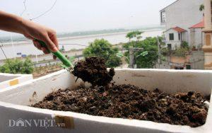 Cách trồng măng tây trong thùng xốp tại nhà