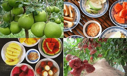 Mua trái cây miền tây ở Hà Nội