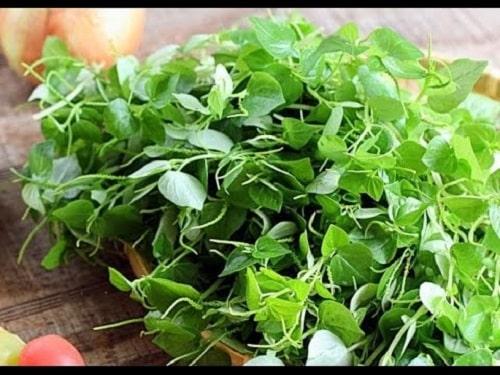các loại rau dại tốt cho sức khỏe