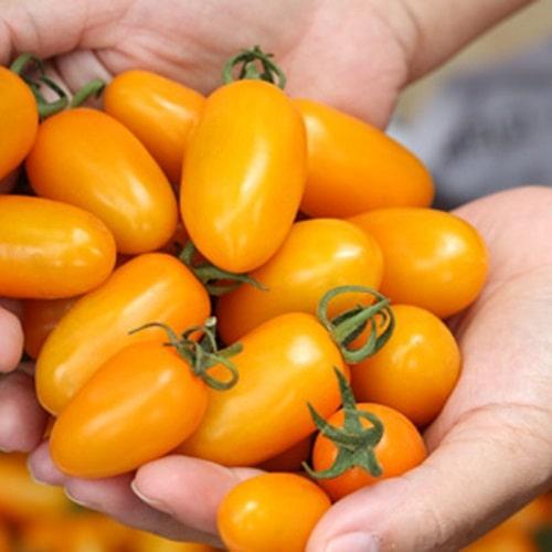 tác dụng của cà chua bi trong làm sạch máu