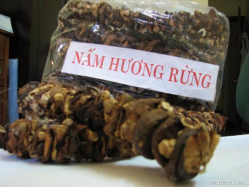 Giá nấm hương rừng bao nhiêu hà nội